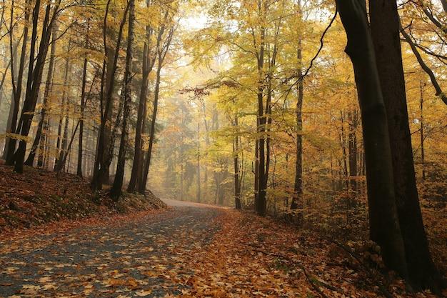 Ścieżka przez jesienny las w mglisty poranek