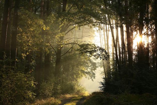 Ścieżka przez jesienny las w mglisty słoneczny poranek