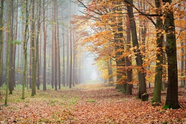 Ścieżka przez piękny jesienny las