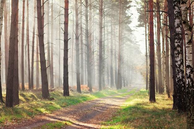 Ścieżka przez piękny słoneczny jesienny las
