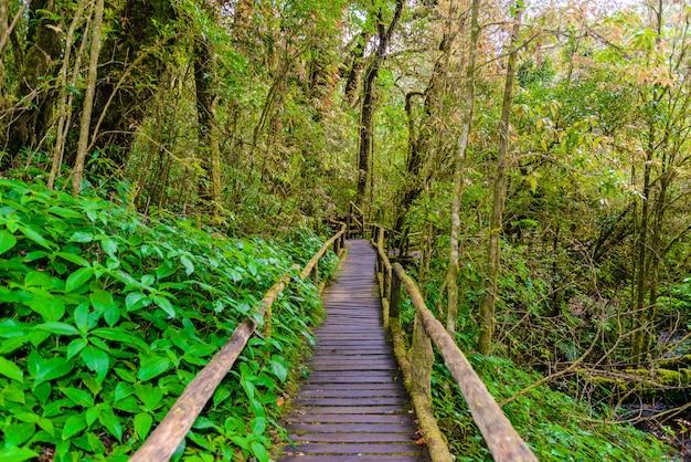 Ścieżka przyrodnicza ang ka luang