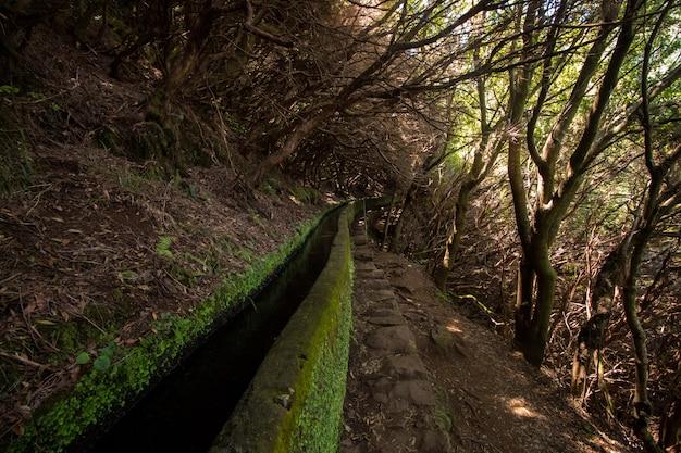 Ścieżka przyrodnicza o nazwie levada z 25 fontes położona na maderze