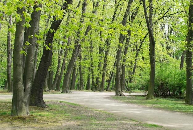 Ścieżka rowerowa lub piesza ścieżka w old green park. wiosenna aleja z kasztanami i dębami