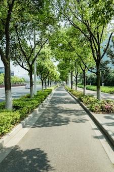 Ścieżka rowerowa z drzewami