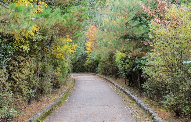 Ścieżka spacerowa między drzewami w parku