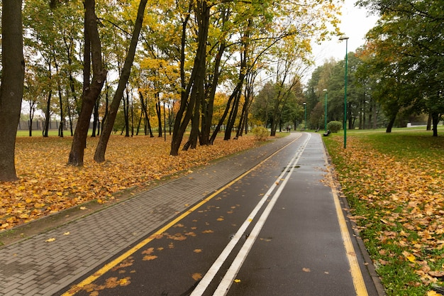 Ścieżka spacerowo-rowerowa w jesiennym parku.