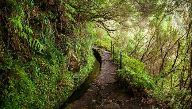 Ścieżka trekkingowa w lewadzie