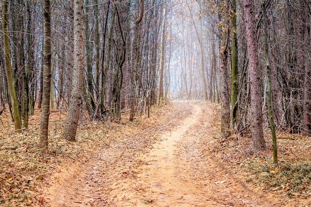Ścieżka w jesiennym lesie sosnowym późną jesienią