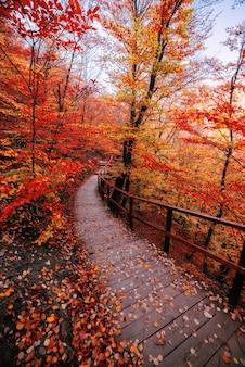 Ścieżka w jesiennym złocistym lesie, wakacje koncepcyjne, spacer, relaks, dzień wolny, bez prądu