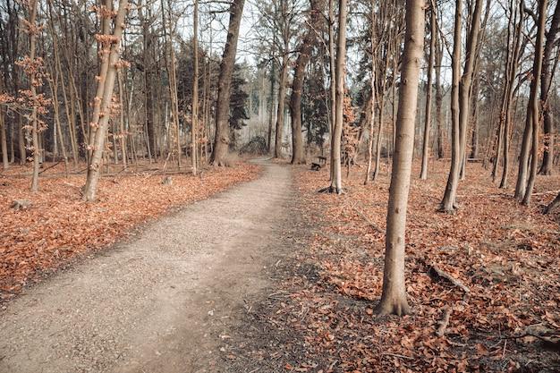 Ścieżka w lesie otoczonym liśćmi i drzewami pod zachmurzonym niebem