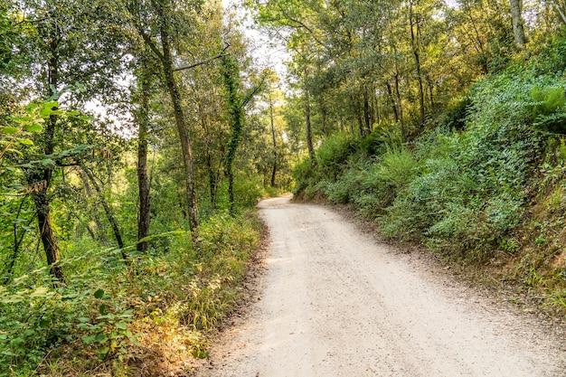 """Ścieżka w lesie w naturalnym parku masywu """"les gavarres""""."""