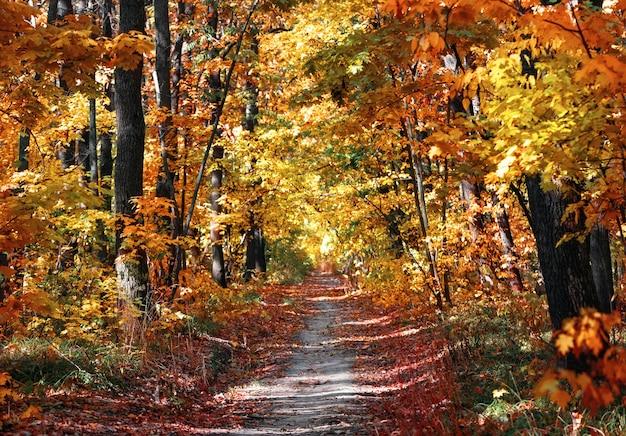Ścieżka w parku jesień