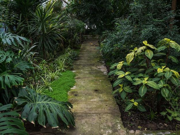 Ścieżka w szklarni z tropikalnymi roślinami. światło słoneczne przedostaje się przez szklane okna