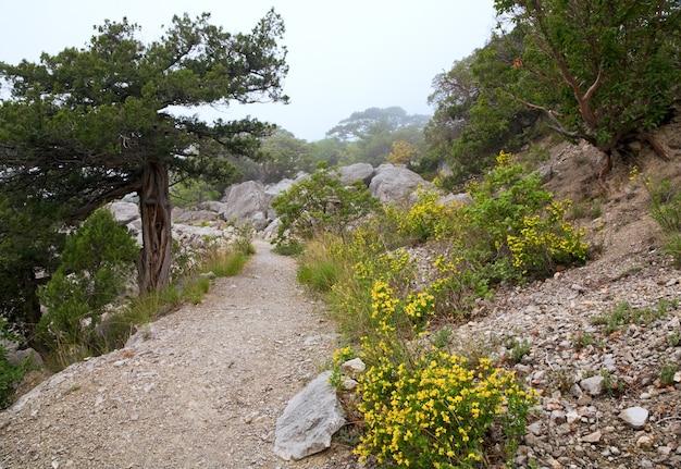 Ścieżka w wiosennym rezerwacie mglistym (krym, ukraina )