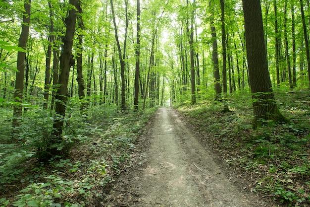Ścieżka w zielonym lesie