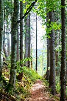 Ścieżka wśród zielonych drzew w słonecznym lesie