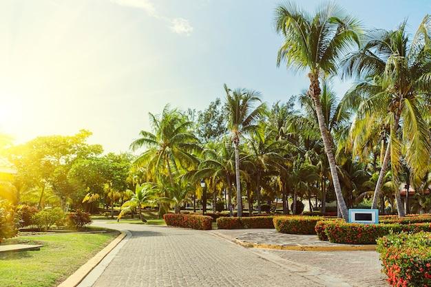 Ścieżka z płytami chodnikowymi wśród palm w ogrodzie. gaj palmowy w tropikach. latem ścieżka spacerowa w ogrodzie.