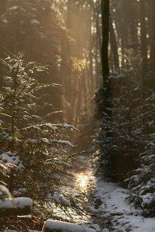 Ścieżka zakrywająca śniegiem w lesie otaczającym zielenią pod światłem słonecznym
