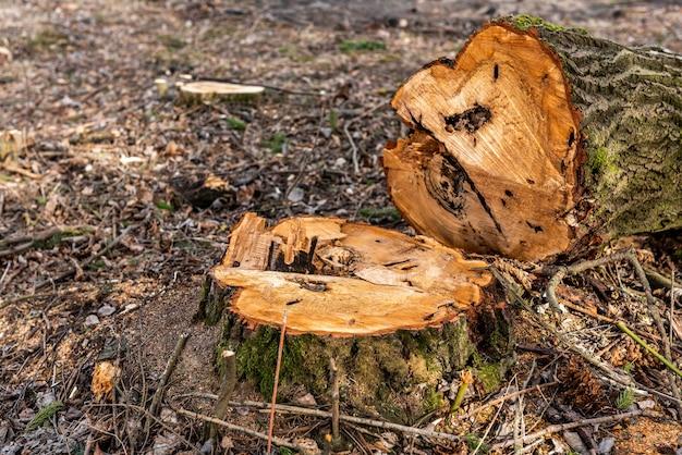 Ścinaj krzewy w lesie