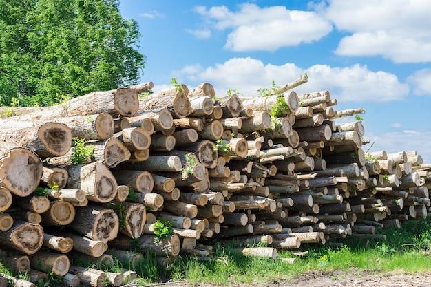 Ścinanie drzew w lesie