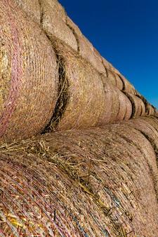 Ściśle związane tkaną siatką słomianych łodyg przechowywanych w dużym stosie, zbliżenie