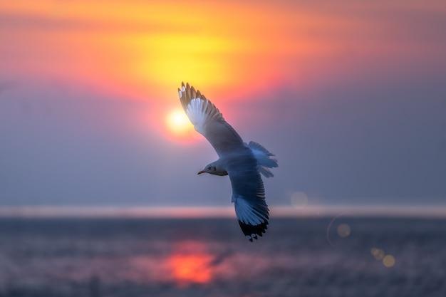 Seagull latanie w niebie nad morzem.