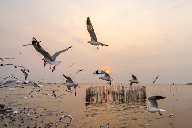 Seagulls ptasi latanie nad morzem z pięknym zmierzchem
