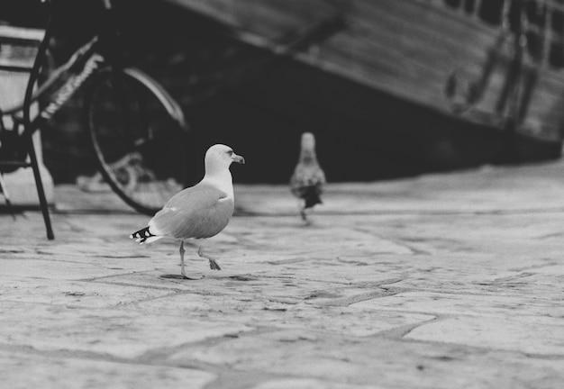 Seagulls w porcie