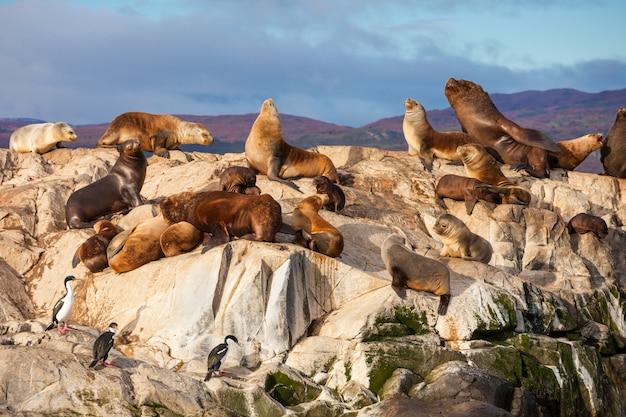 Seal island w pobliżu ushuaia