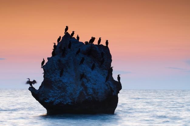 Seascape kolorowy lato. skalista wyspa z ptakami o zachodzie słońca
