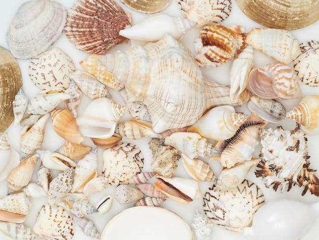 Seashell tło z mnóstwo różnymi seashells wypiętrzającymi wpólnie, odgórny widok