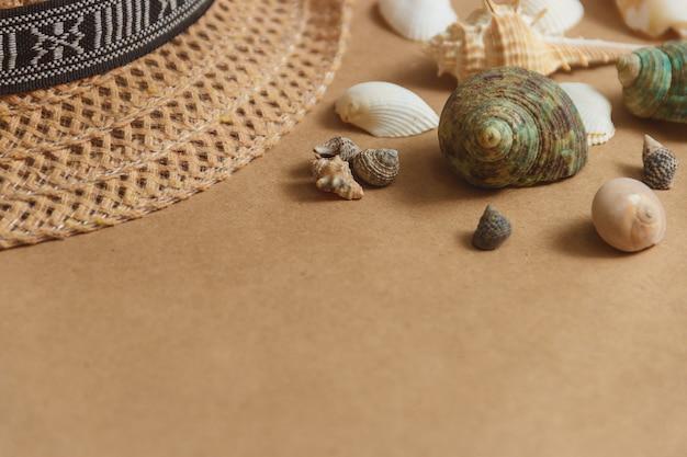 Seashells na drewnianym tle z copyspace.