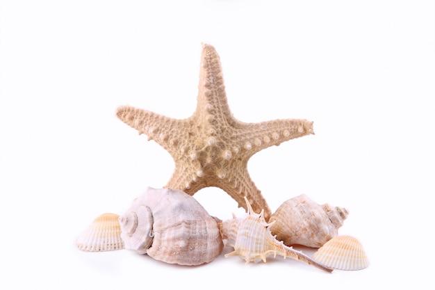 Seashells odizolowywający na bielu, lata pojęcie