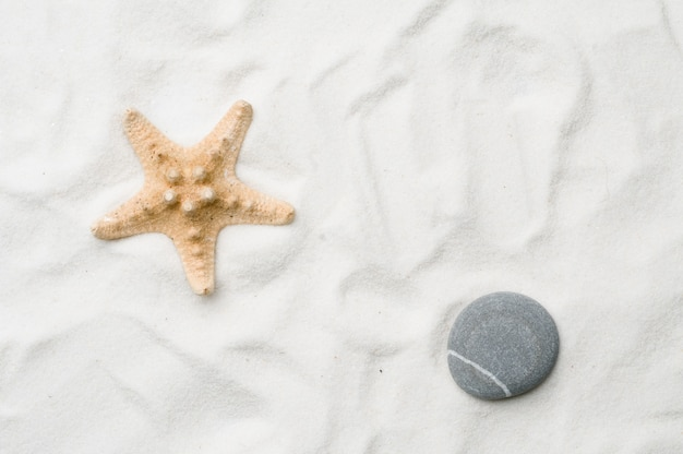 Seastar na tle piasku