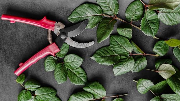 Sekator ogrodowy wśród ciętych liści róży. ogrodnictwo domowe