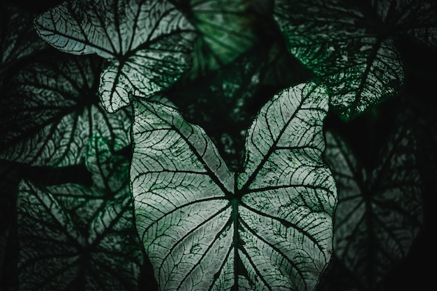Selekcyjna ostrość zamykał w górę tropikalnego lato zieleni liścia brzmienia ciemnego tła