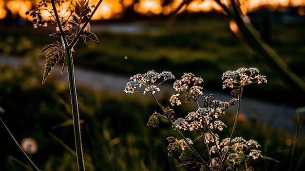Selekcyjnej ostrości zbliżenia strzał piękna zieleń w ogródzie