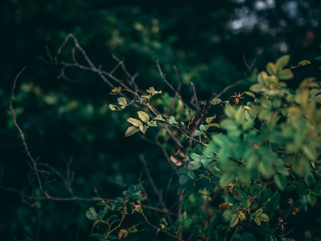 Selekcyjnej ostrości zbliżenia strzał rośliny z zielonymi liśćmi