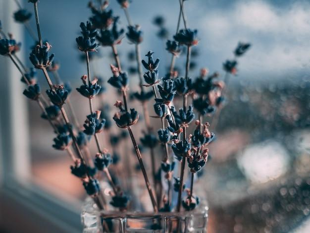 Selekcyjny zbliżenie strzał błękitni lawendowi kwiaty na tle kropelki wody