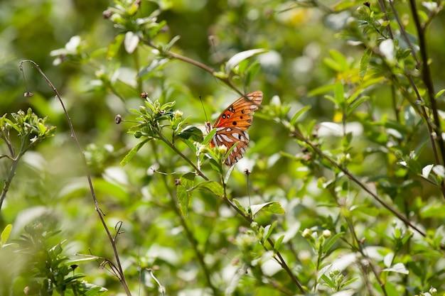 Selektywna ostrość strzelająca motyl na zielonej roślinie