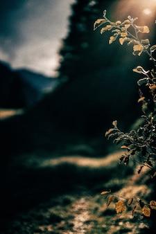 Selektywne focus of plant