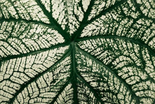 Selektywne fokus białego i zielonego liścia tekstury tła