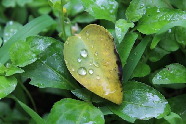 Selektywne fokus shot of dewdrops na zielonym liściu