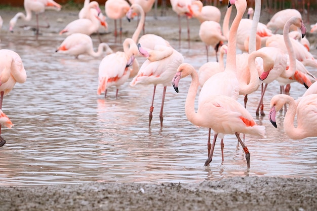 Selektywne fokus strzał flamingów stojących w wodzie
