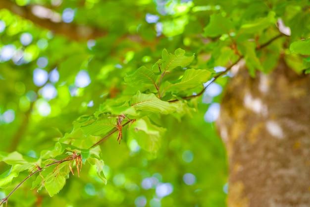 Selektywne fokus strzał gałęzi drzewa z zielonymi liśćmi