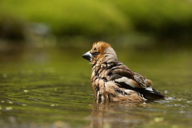 Selektywne fokus strzał ładny ptak grubodziób