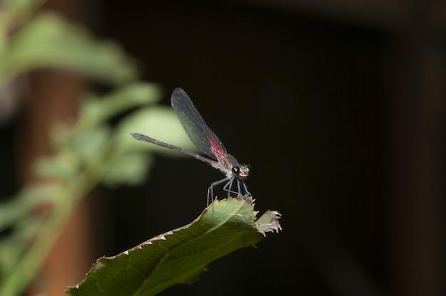 Selektywne fokus strzał owad skrzydlaty sieci siedzi na liściu