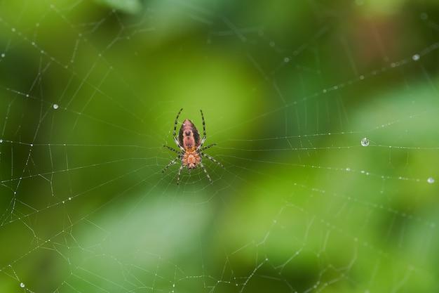 Selektywne fokus strzał pająka w sieci z rozmytym tłem