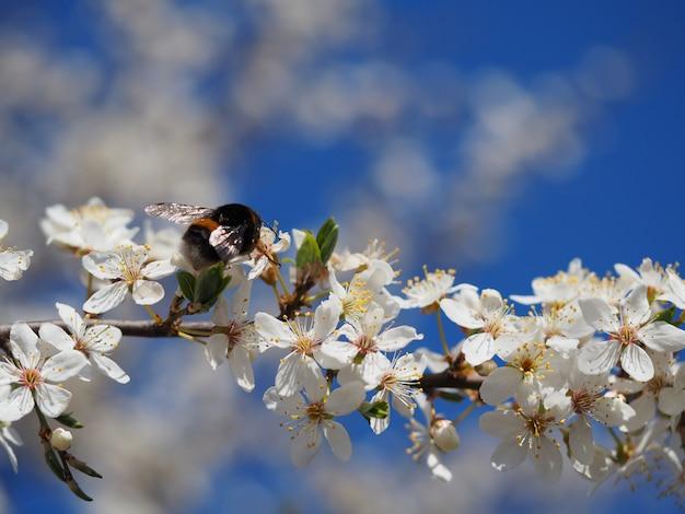 Selektywne fokus strzał piękne drzewo kwitnące pod bezchmurnym niebem