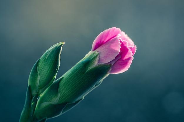Selektywne fokus strzał piękny różowy kwiat